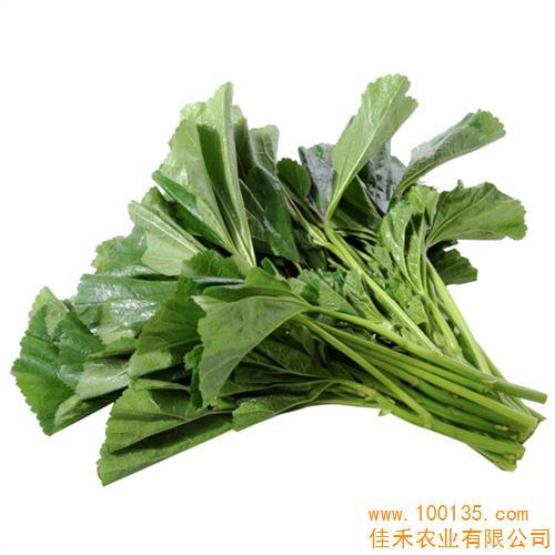 多年生蔓性草本植物,地瓜秧蔓顶端的10~15厘米及嫩叶,叶柄合称茎尖